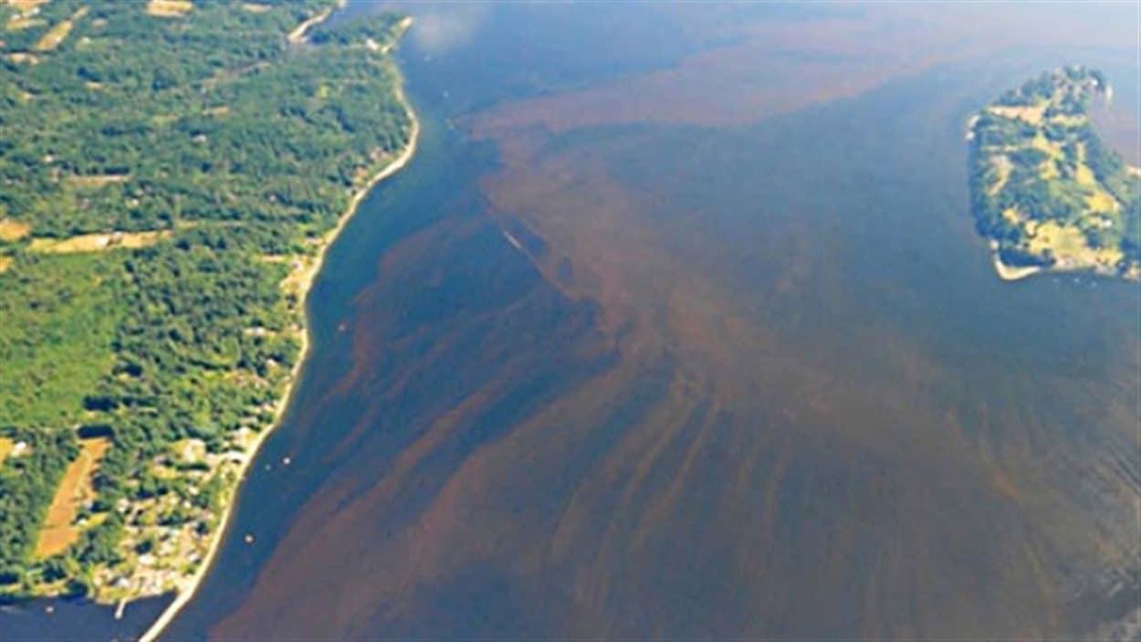 Une efflorescence d'algues toxiques lors d'une année précédente.