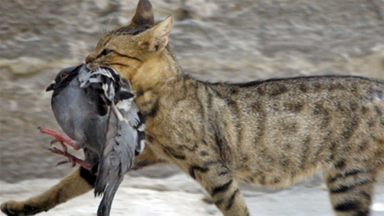Un chat tient un oiseau dans sa bouche
