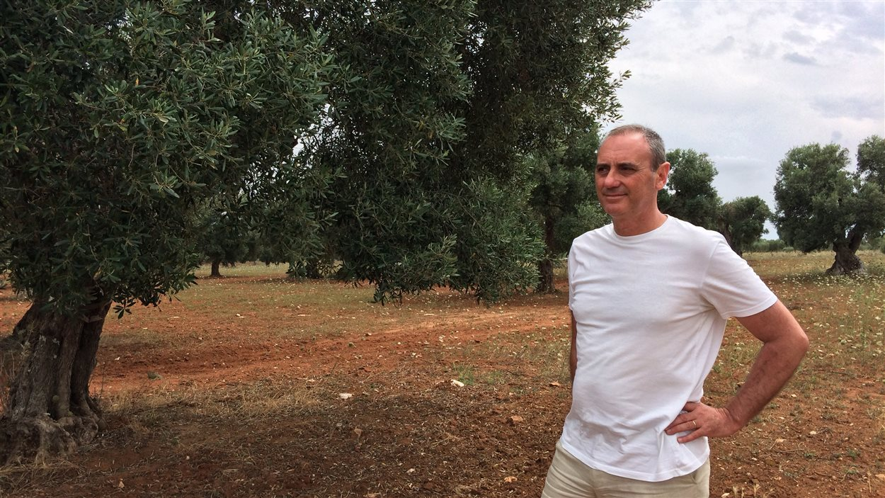 Pantaléo Piccino, propriétaire d'une oliveraie, à Lecce, en Italie
