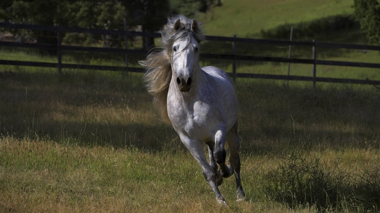 Un cheval au galop
