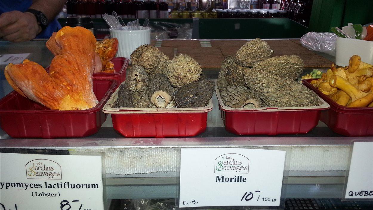 Des champillons sauvages au marché Jean-Talon