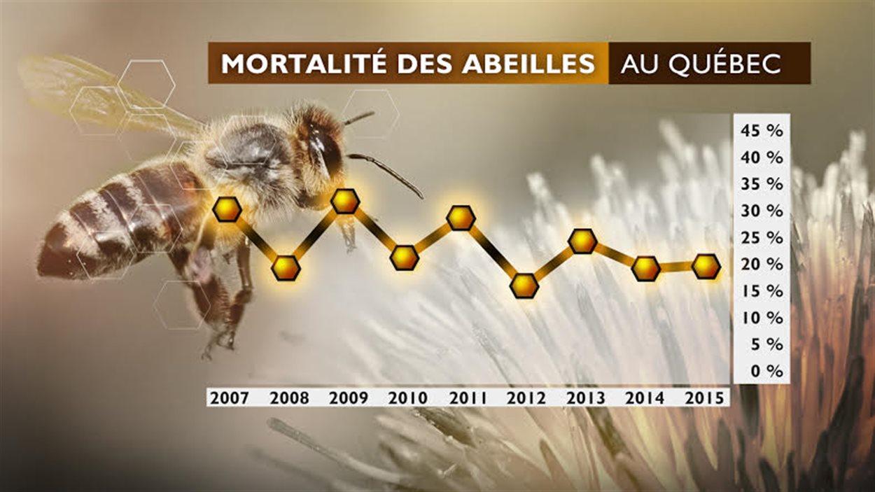 La mortalité des abeilles au Québec