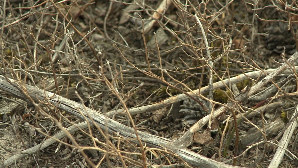 Des arbustes ont perdu toutes leurs feuilles.
