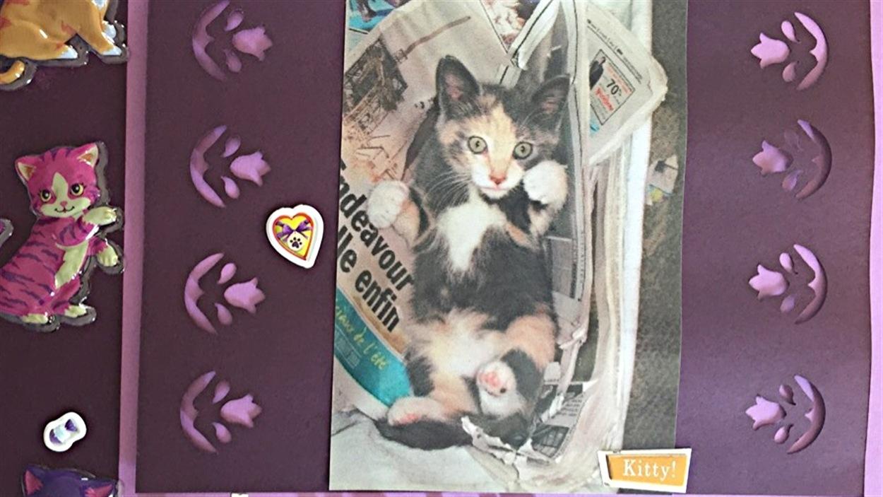 La chatte Mignonne a été euthanasiée après avoir été blessée à la tête.