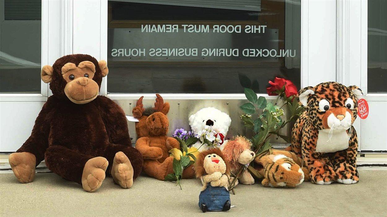 Des animaux en peluche ont été laissés devant la clinique du Dr Palmer au Minnesota.