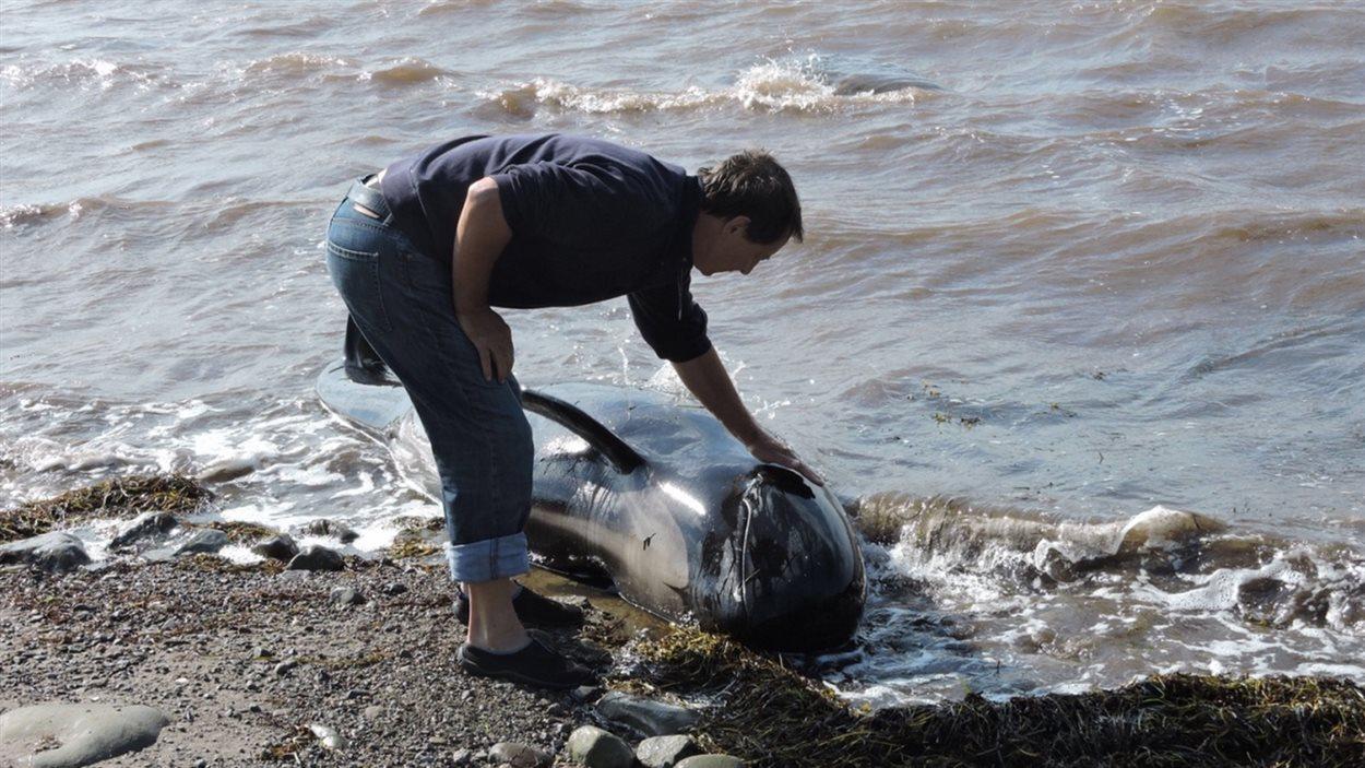 Un homme vient en aide à une baleine à Judique en Nouvelle-Écosse.
