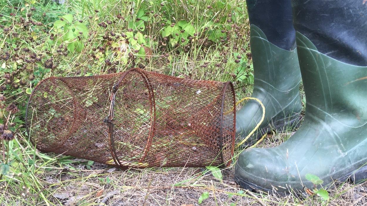 Cette trappe a permis de vérifier la présence de poissons dans le ruisseau Nolin.