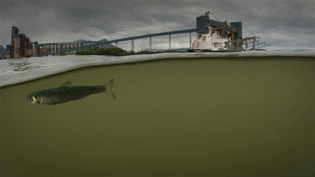 Un croquis du terminal de GNL dans l'estuaire de la Riviere Skeena