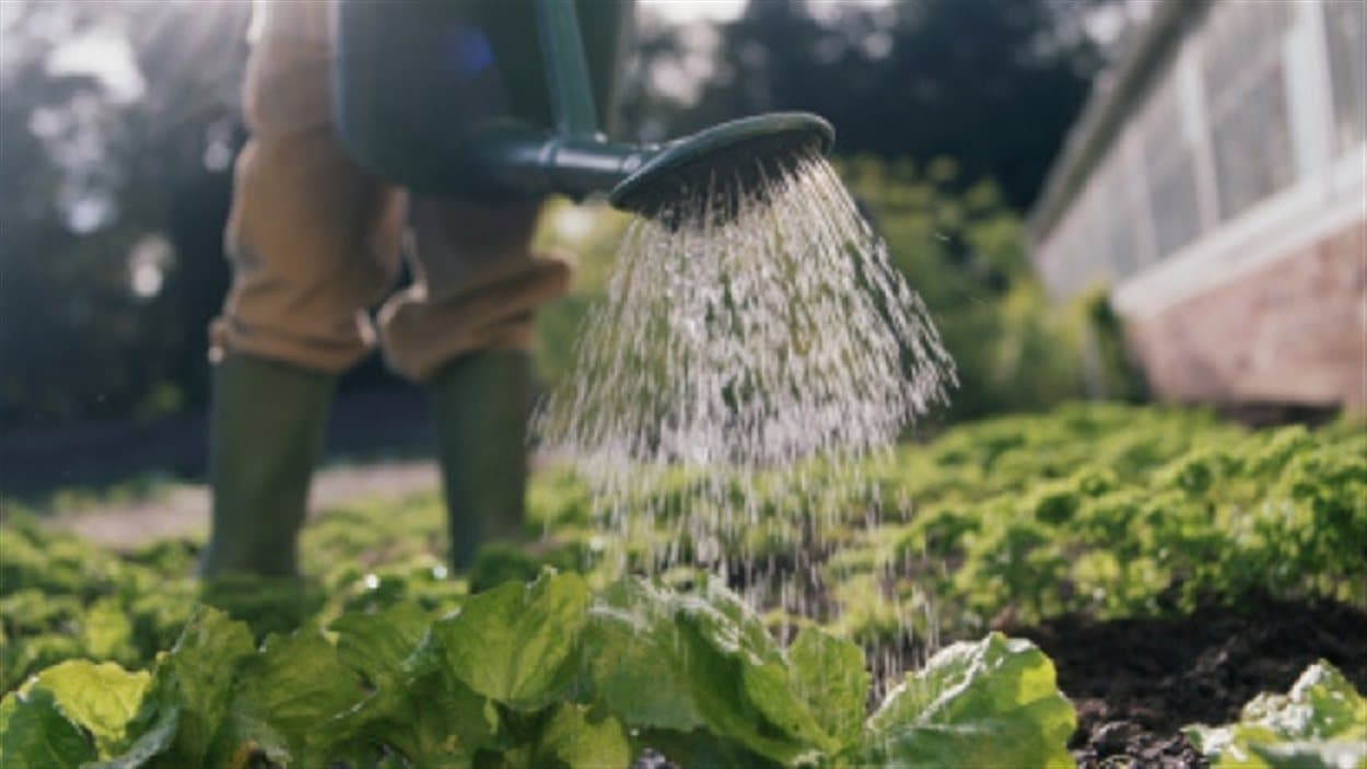 Un jardinier arrose ses plantes