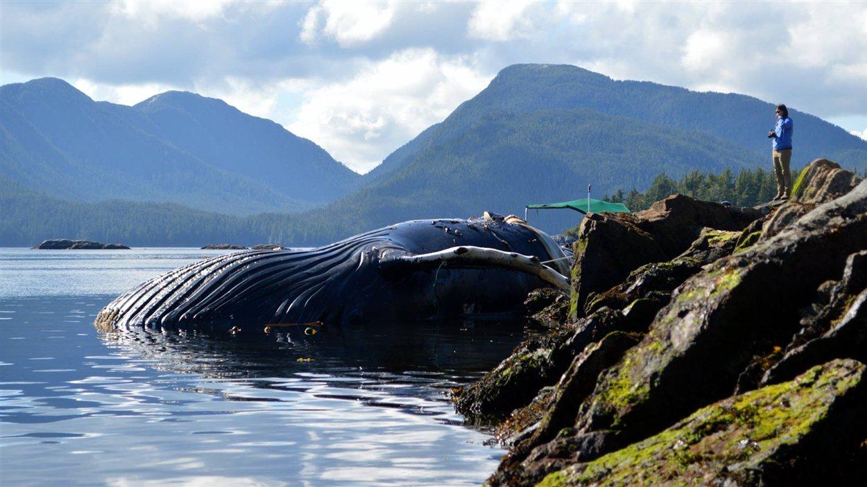La baleine retrouvée morte sur la côte nord de la Colombie-Britannique
