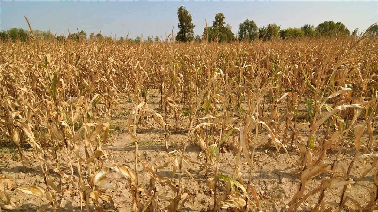 L'été 2015 a été synonyme de sécheresse dans l'ouest du pays