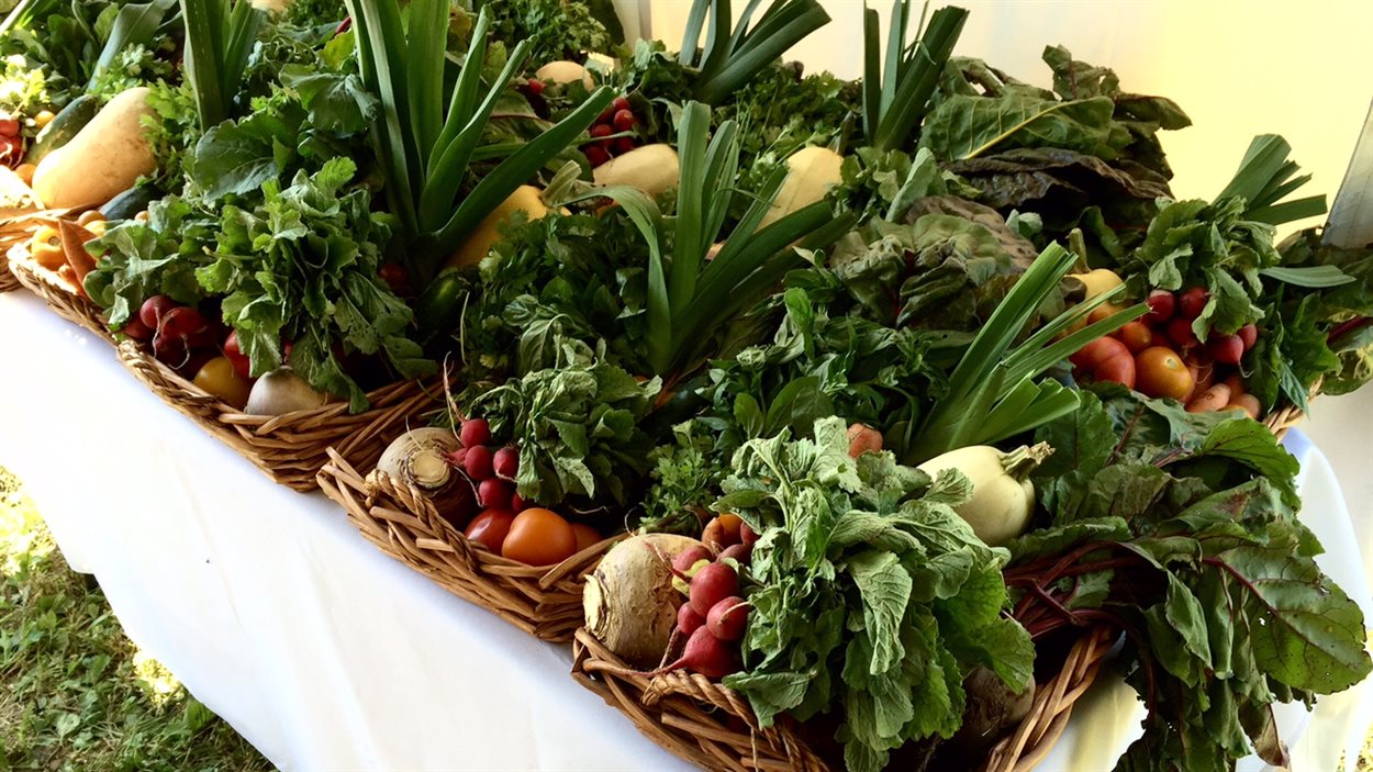 Des légumes frais cueillis dans les jardins du Projet d'agriculture communautaire d'Argenteuil.