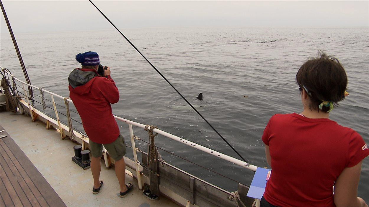 L'équipage du RoterSand en a profité pour prendre en photo le visiteur inattendu.