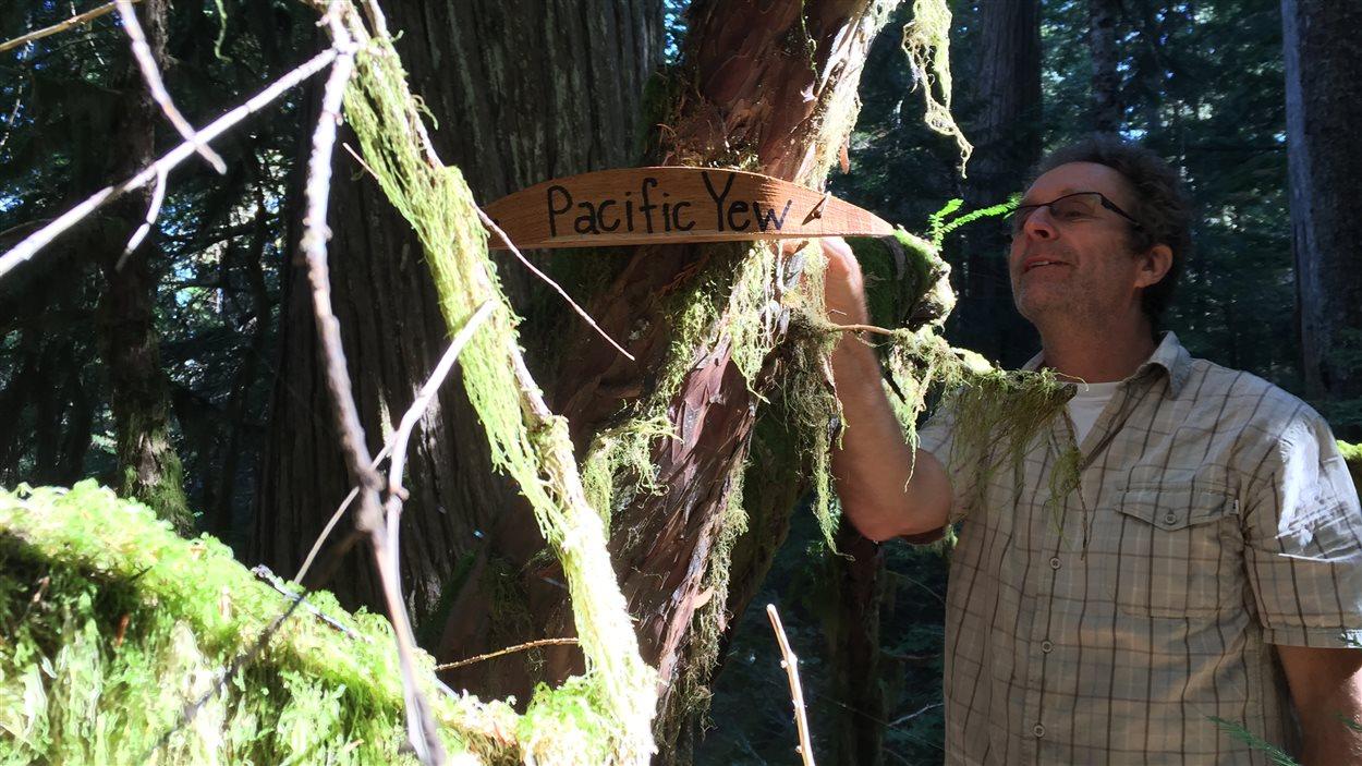 Ross Muirhead du groupe Elphinstone Logging Focus identifie les Ifs de l'Ouest (Pacific Yew) sur le sentier d'une forêt ancienne, en Colombie-Britannique.