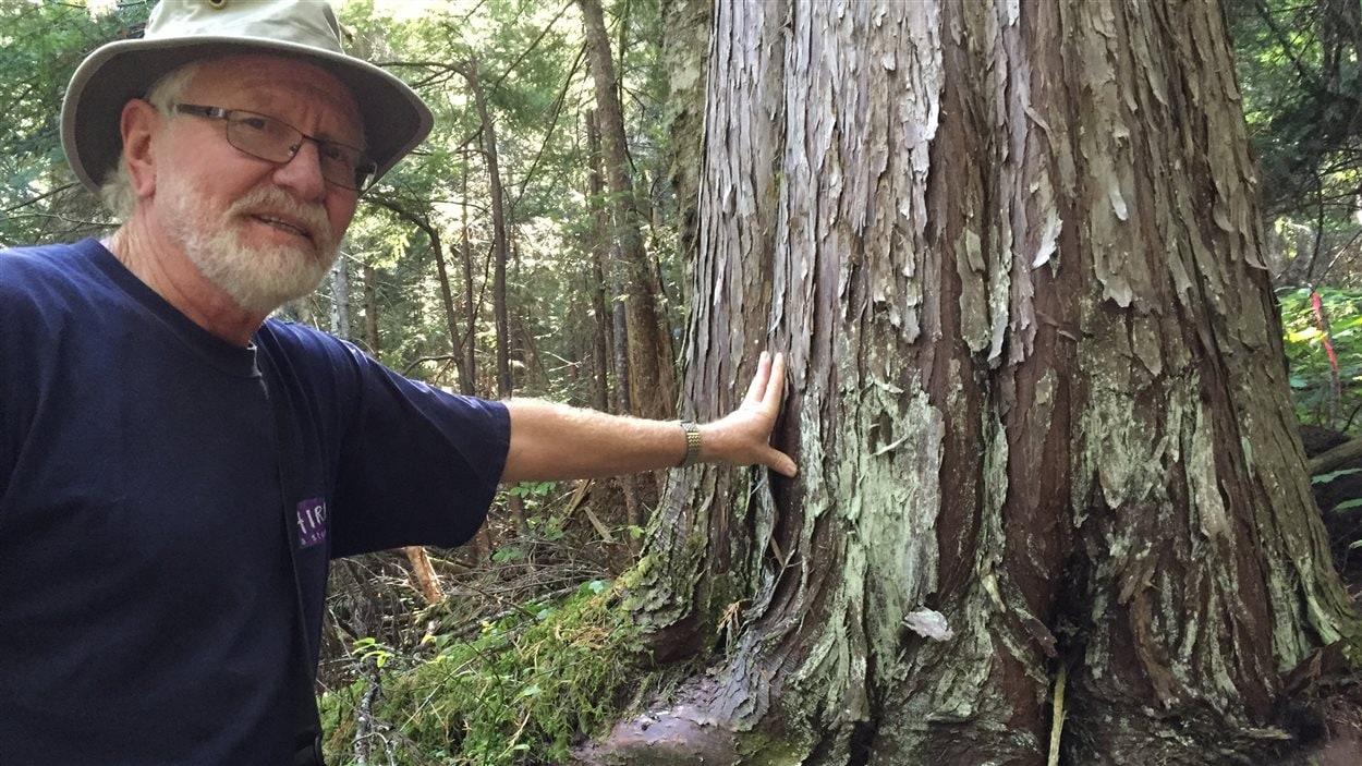 Hans Penner du groupe Elphinstone Logging Focus montre un arbre ancien