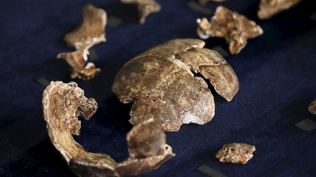 La nouvelle espèce a été baptisée Homo naledi en l'honneur de la cave Rising Star (étoile montante), où les ossements ont été découverts. Naledi signifie étoile en langage sesotho.