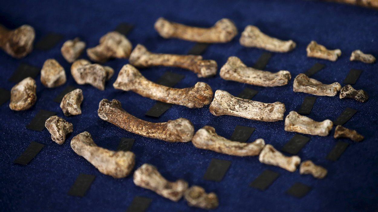Selon les scientifiques, l'Homo naledi enterrait lui aussi ses morts, comme les ancêtres des humains actuels.