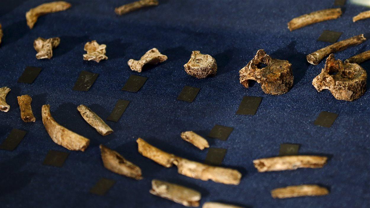 Les ossements d'Homo naledi ont été trouvés dans une cave située près des sites réputés de Sterkfontein et Swartkrans, à environ 50 km au nord-ouest de Johannesburg.