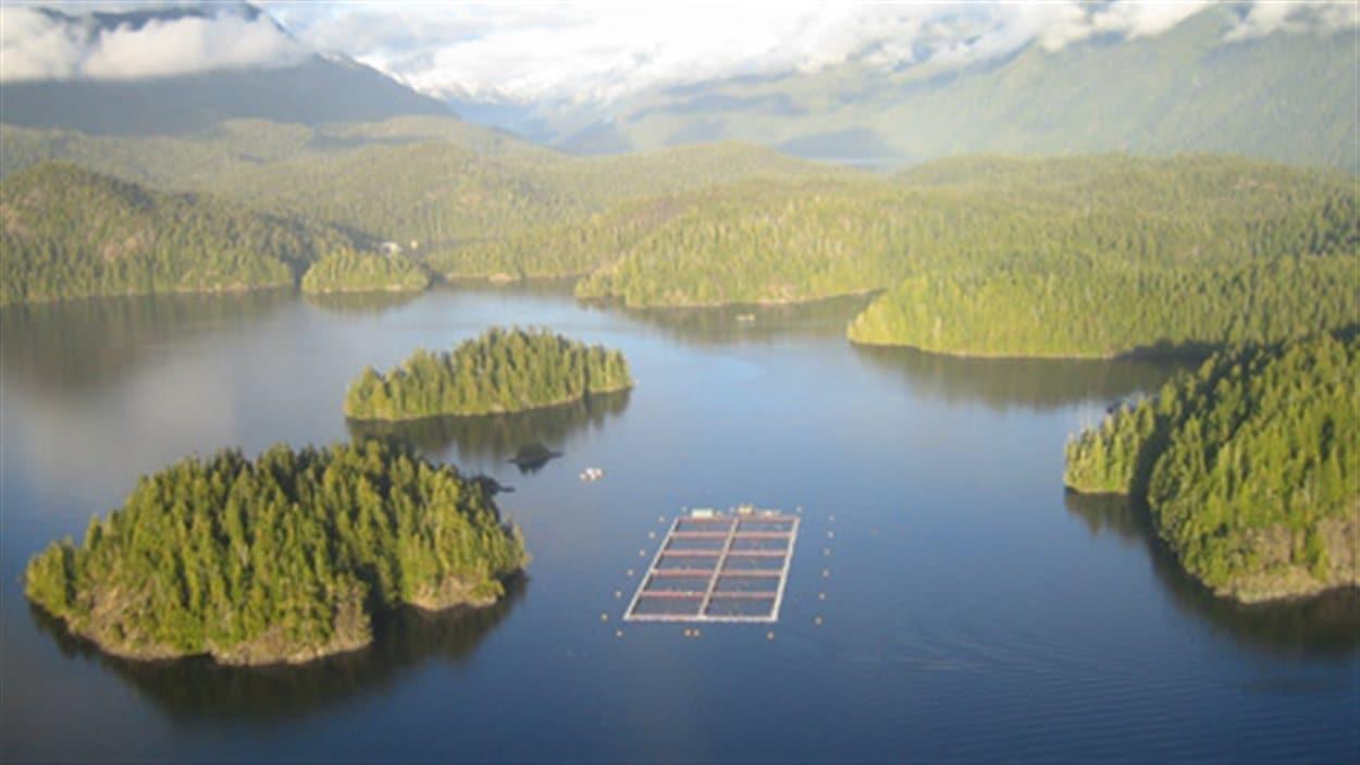 Site d'enclos d'aqauculture apparetenant à Cermaq dans la réserve de la biosphère Clayoquot Sound
