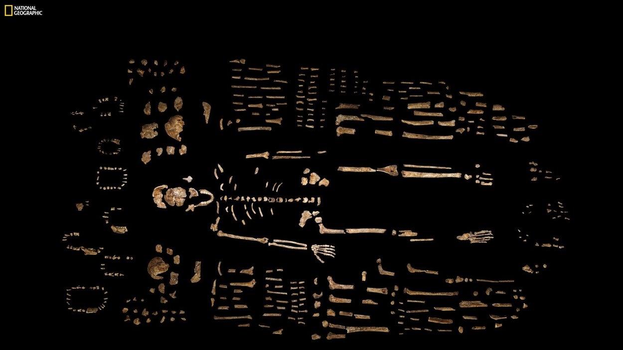 Cette photo de l'édition d'octobre 2015 de National Geographic montre une reconstitution partielle d'un squelette d'Homo Naledi et d'autres ossements découverts en Afrique du Sud.