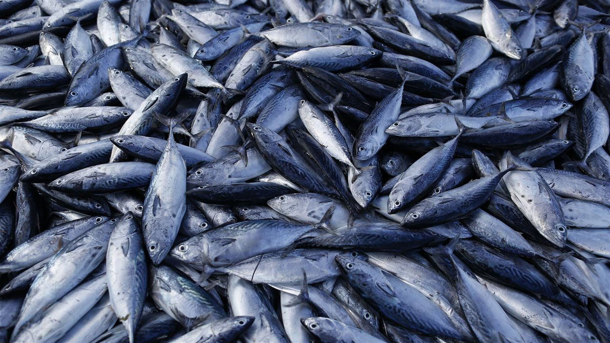 Le WWF prône une consommation plus raisonnable du poisson.