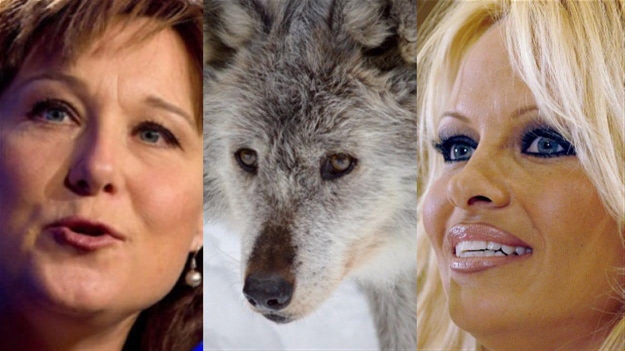 Pamela Anderson interpelle Christy Clark sur l'abattage des loups