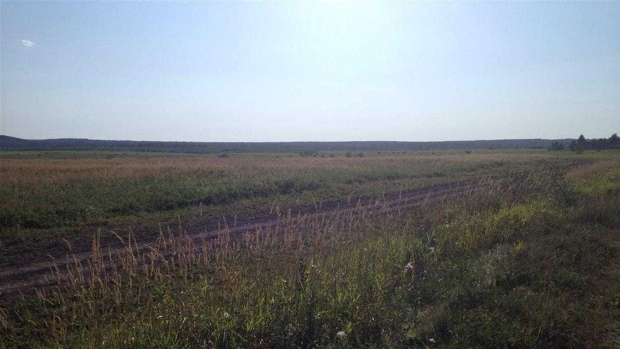 Terre agricole dans le secteur de St-Mathieu-d'Harricana