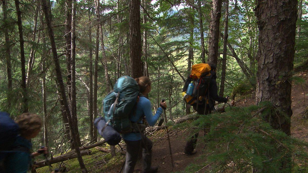 Le sentier débute dans la forêt pluviale de l'Alaska.