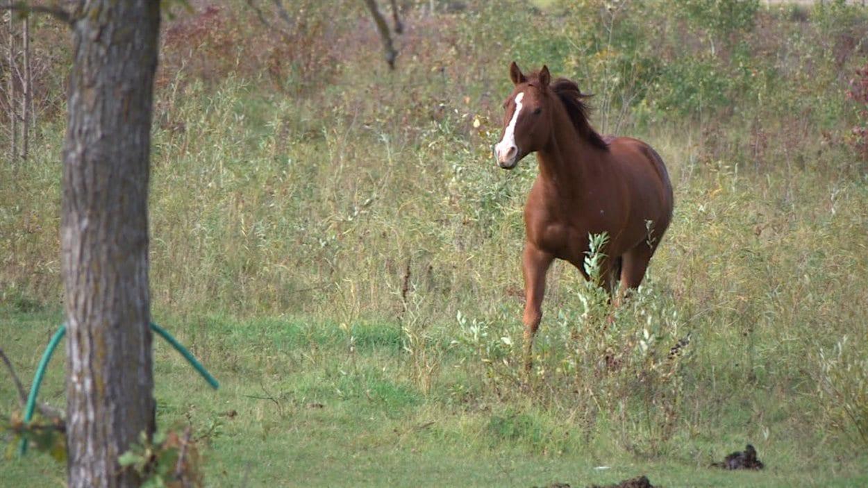 Le refuge tente de reproduire un environnement naturel pour les chevaux comme Gerome