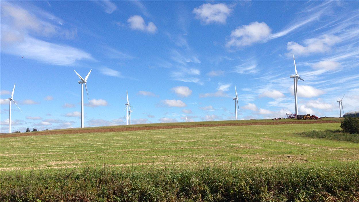 Les éoliennes sont omniprésentes sur la côte ouest de l'Île-du-Prince-Édouard.