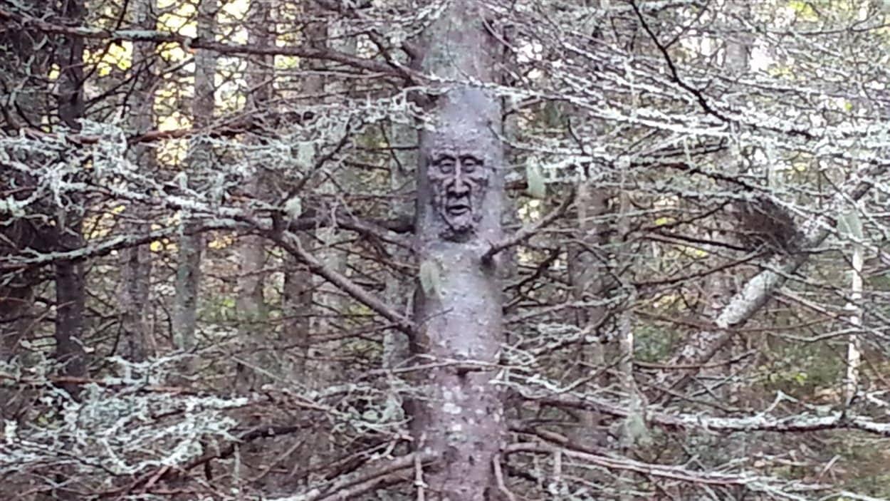 En forêt, il faut être attentif aux détails, comme ce visage sculpté à même l'arbre.