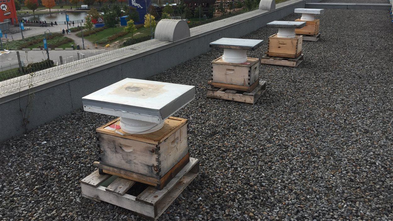 Des ruches sont installées tant sur le toit de l'Accueil Bonneau que sur celui de commerces environnants.