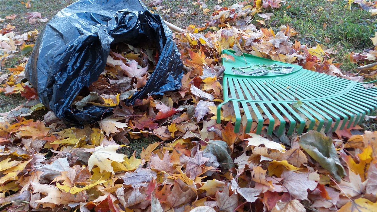quoi faire avec les feuilles mortes  trois options environnementales
