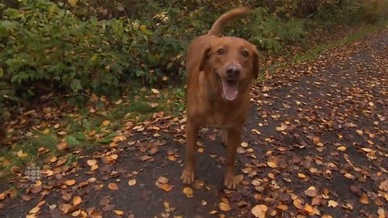 Richmond va décider de garder ou non ses quatre nouveaux parcs à chiens.