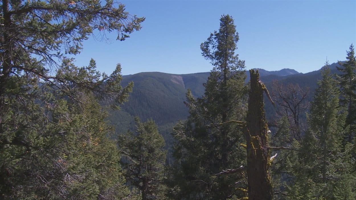 Des montagnes se profilent au loin derrière des arbres.