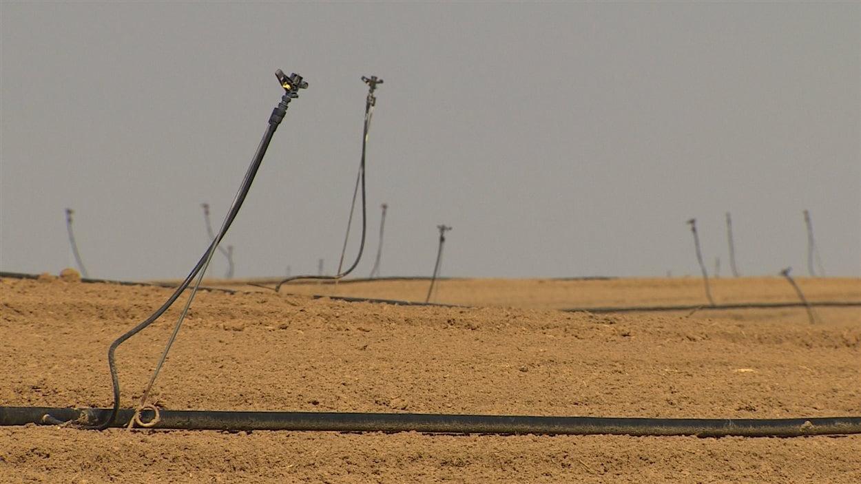 Irrigation en Israël