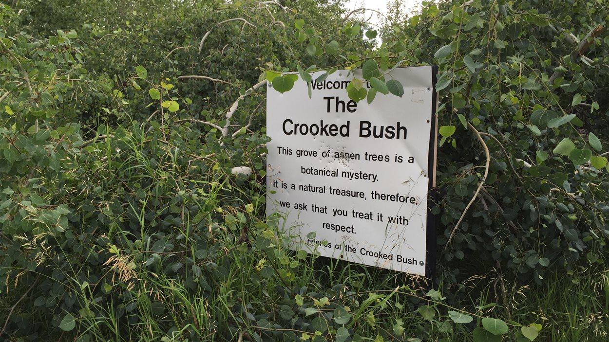 Crooked Bush, en Saskatchewan