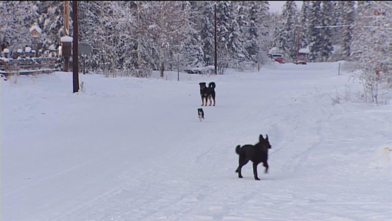 chiens dans la rue en hiver