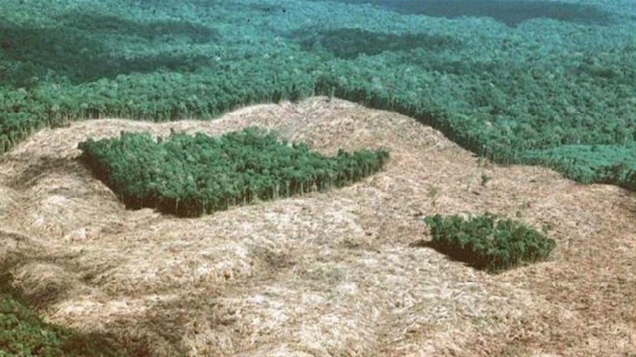 Un exemple de la déforestation en Amazonie au Brésil