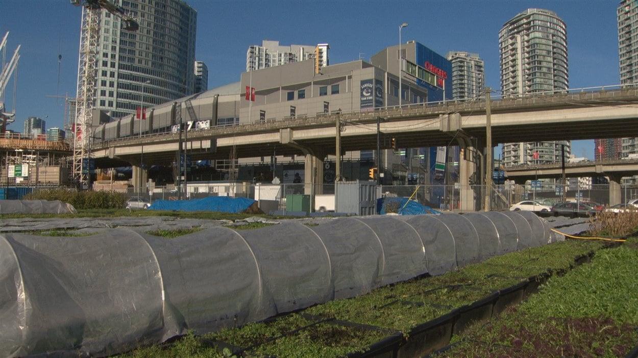 Un potager urbain près des viaducs Georgia et Dunsmuir à Vancouver.