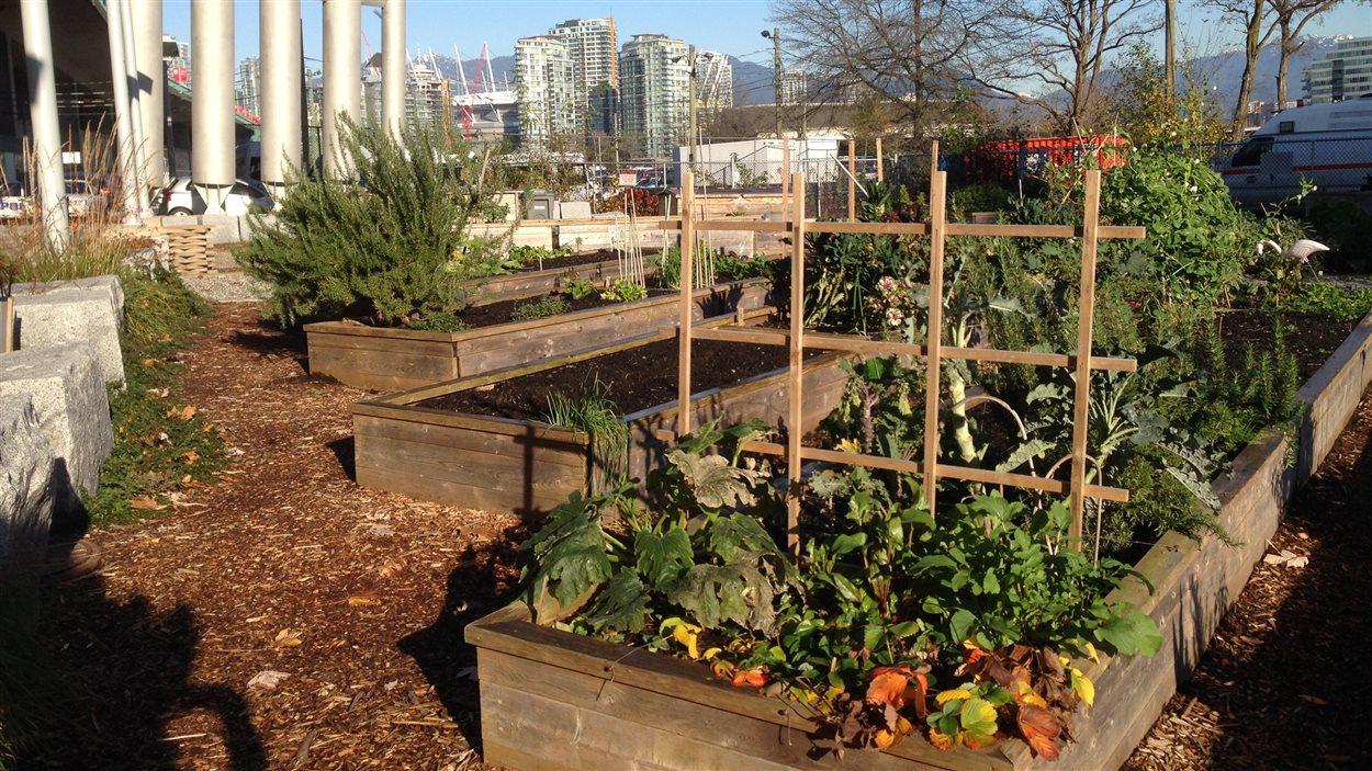 Un jardin communautaire de Vancouver.