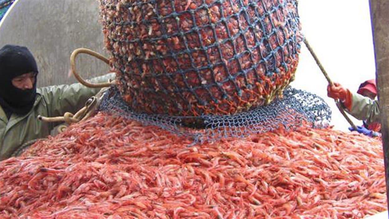 Pêche à la crevette