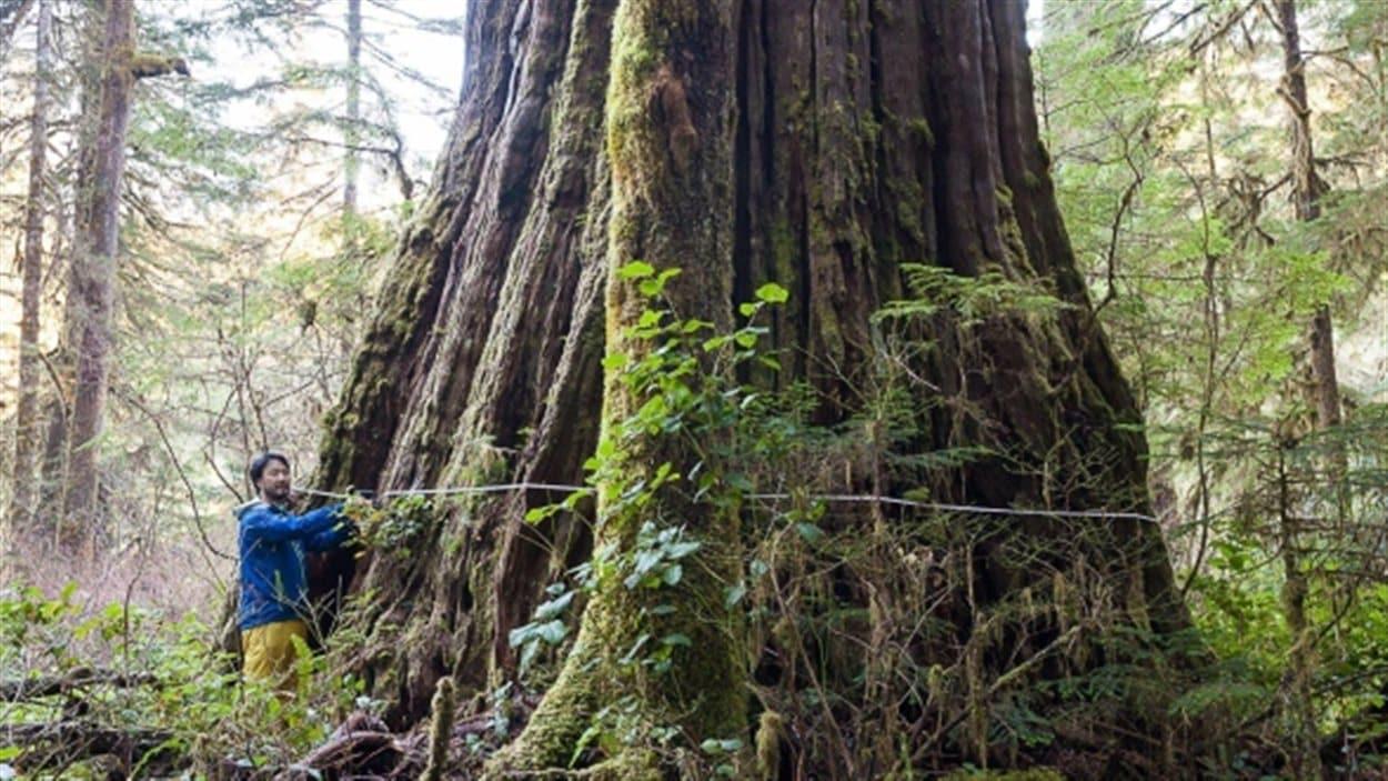 Le «Tolkien géant», dans la vallée de Walbran, sur l'île de Vancouver, en Colombie-Britannique