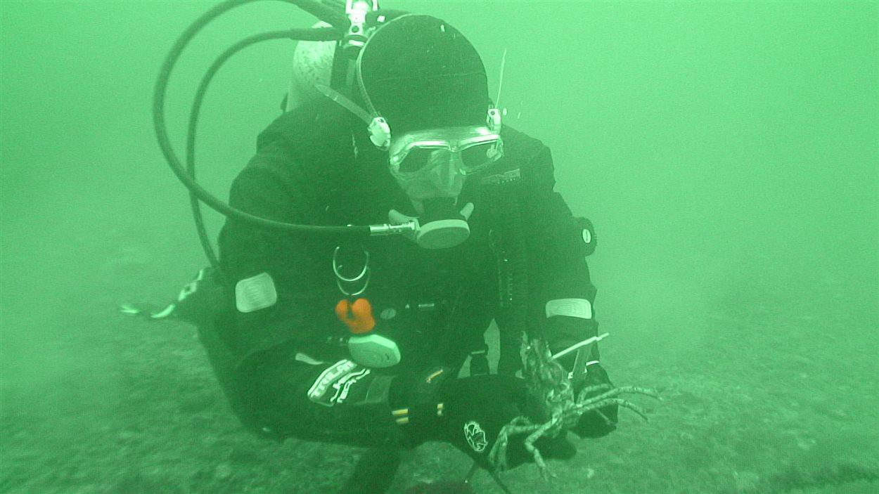 Un plongeur de Pêches et Océans Canada