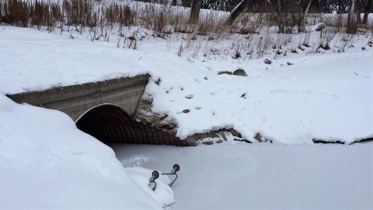 Les eaux usées se jettaient dans la rivière Rouge depuis ce ponceau, situé dans le parc Saint-John's, dans le nord de Winnipeg.