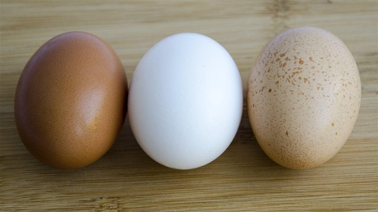 Peu importe la couleur de la coquille, les oeufs ont la même valeur nutritive