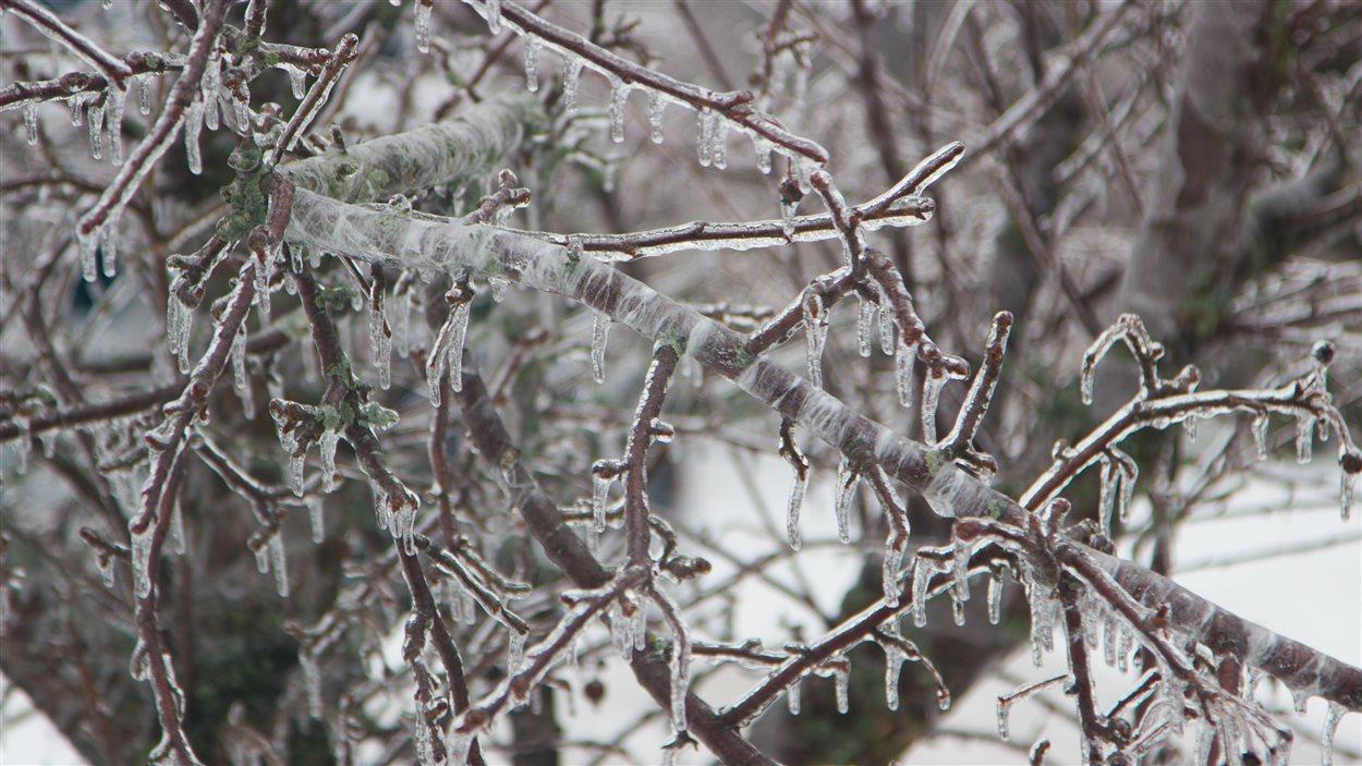 Les accumulations de glace dans les arbres sont importantes.