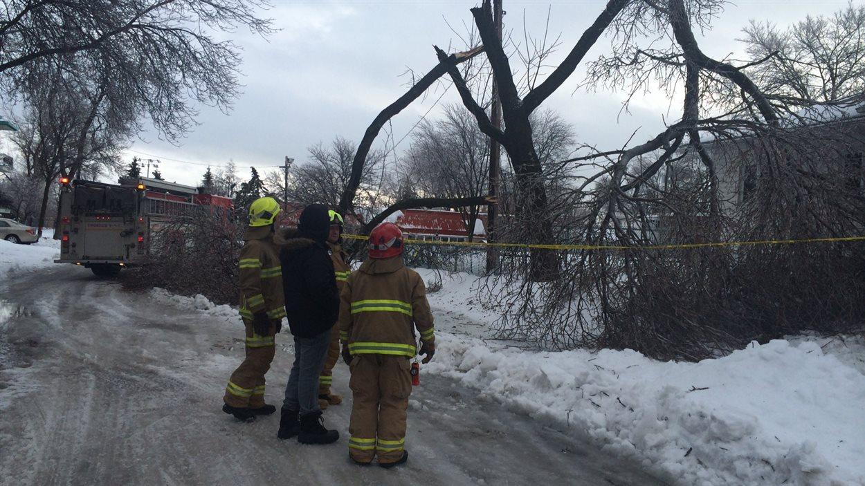 Un arbre est cassé sur la rue des Bouleaux dans Limoilou.