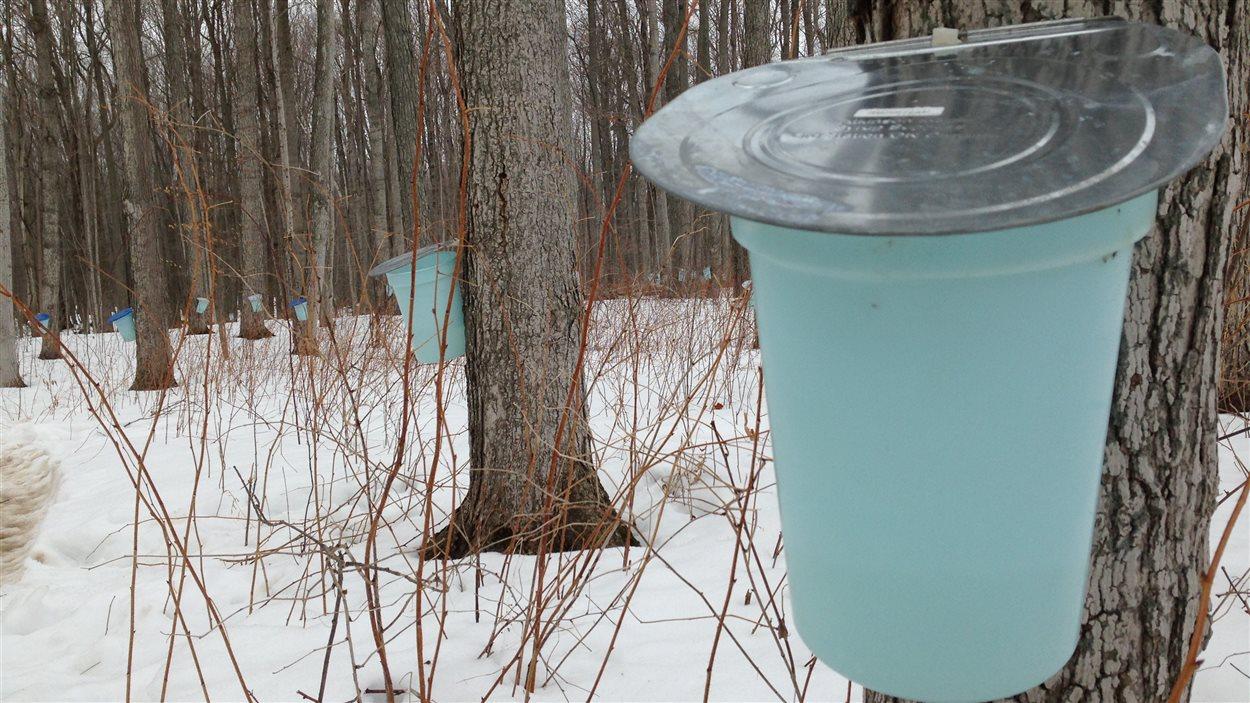 L'Ontario ne représente actuellement que 3 % de la production nord-américaine de sirop d'érable.