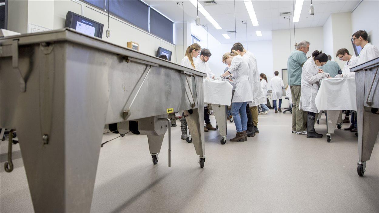 Les tables de travail du laboratoire sont aussi des des coffres dans lesquels sont préservés les corps embaumés.
